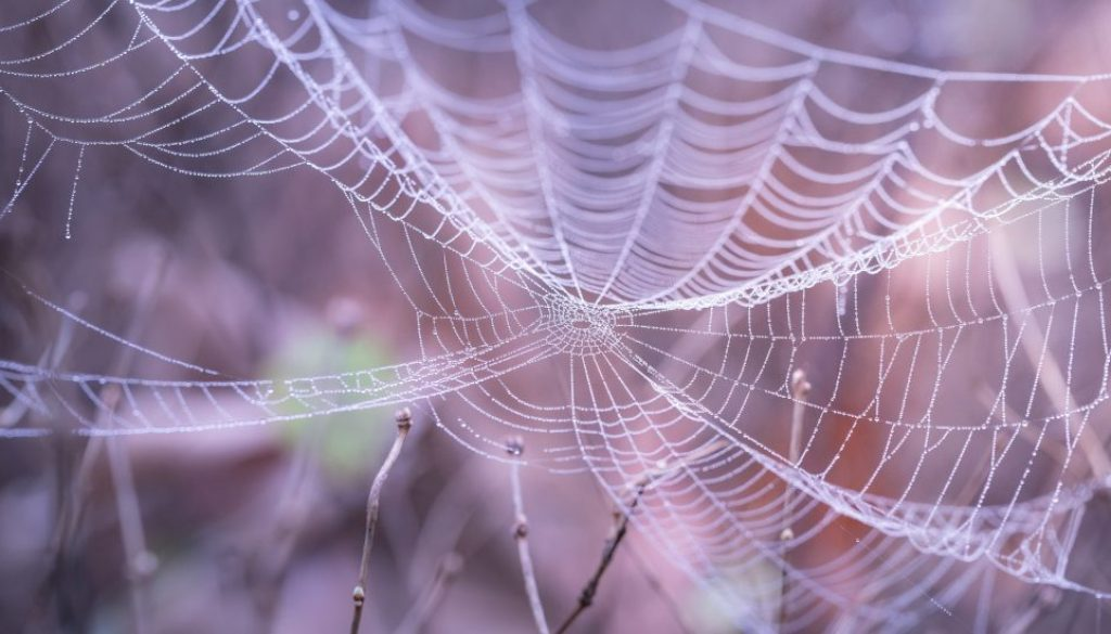 Spider's Web - Get connected.